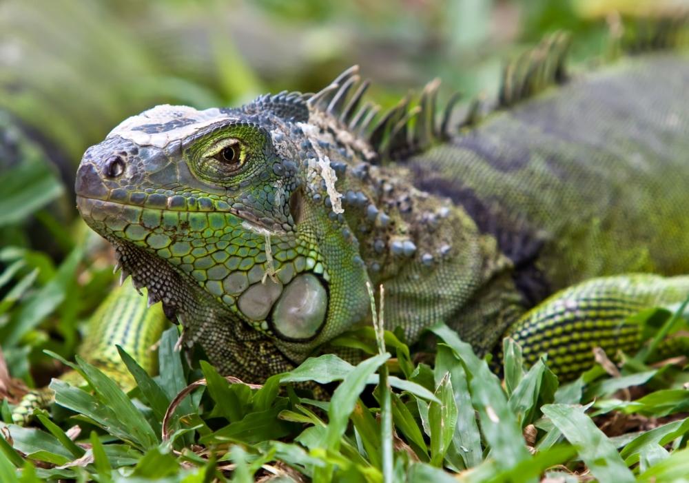 O isolamento de Galápagos replicado no mundo das startups. Seríamos nós esta Iguana?